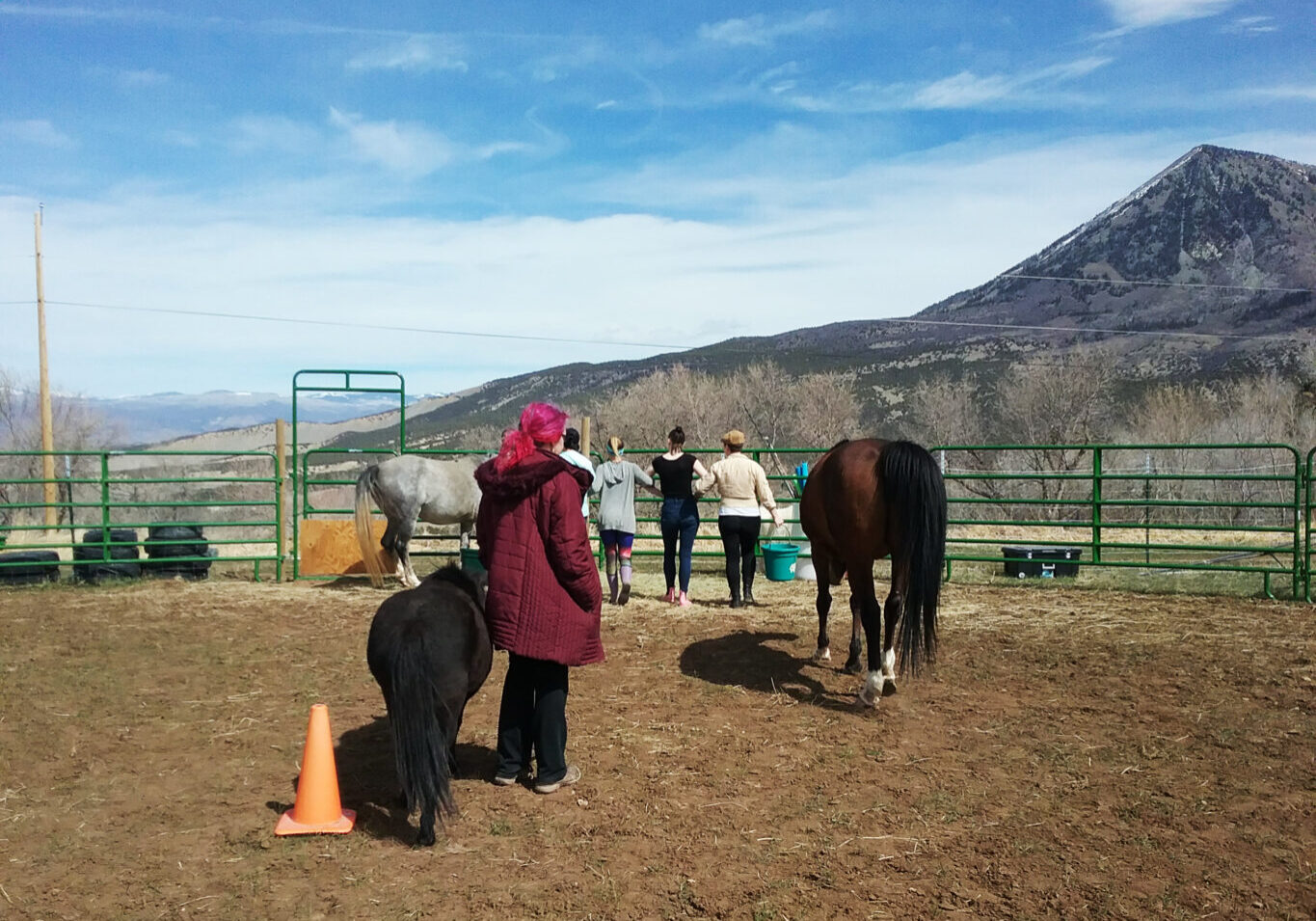 equine-assisted-therapy-session
