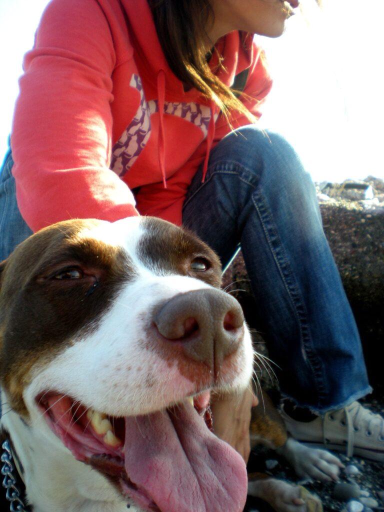 Happy companion dog