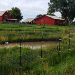 duck-pond-and-farm