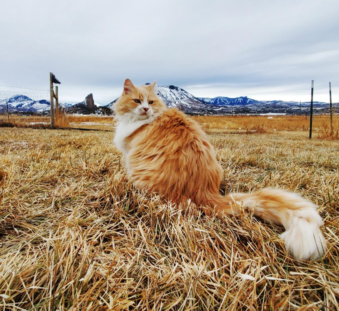 cat in the field