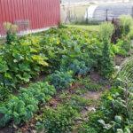 therepeutic-veggie-gardens